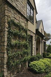 Exterior of House with Ivy